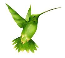 Hummingbird, seo, google, social media